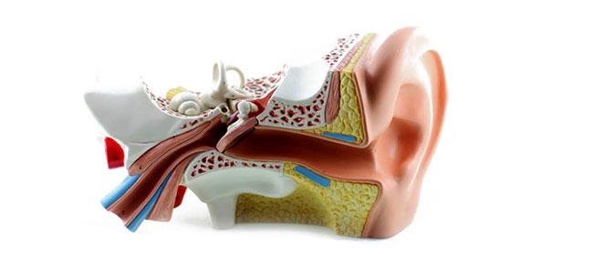 Electrofisiología: Para qué se utiliza - RV ALFA